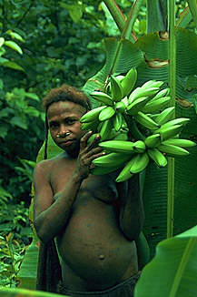 Korowai women with bananas for grilling